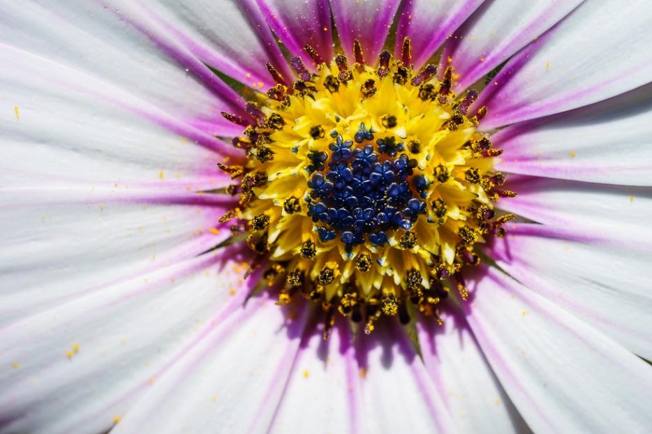 sony-90mm-fe-lens-test-macro-flower